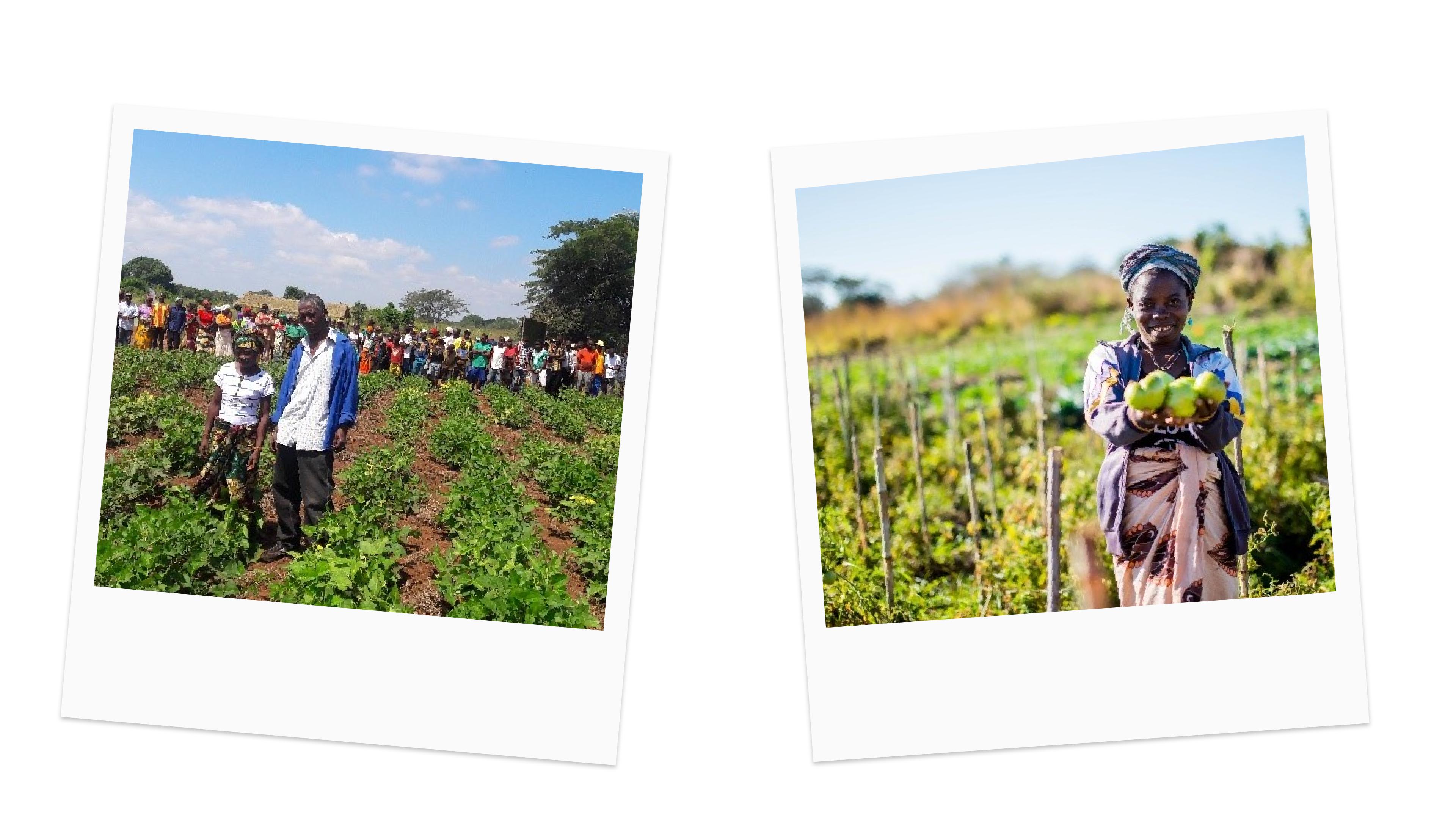 Conservation Farming, Mozambique